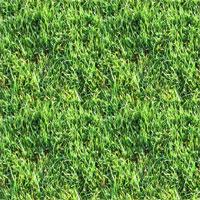 k8gnaradientgrass.jpg