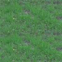k8gnasparsegrass.jpg